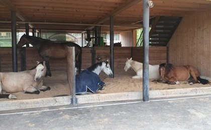 You are currently viewing Does Your Horse Need Rest? Give Him More Bedding!