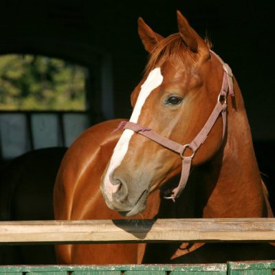 Choosing Between Horse Shavings and Bedding Pellets